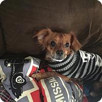 Adopt A Pet :: Rocket - Newfield, NJ