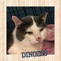 Adopt A Pet :: Dinozzo - Westbury, NY