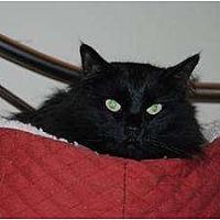 Adopt A Pet :: Shadow - Auburn, CA