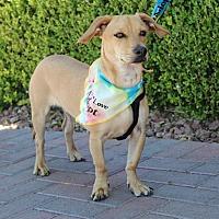 Adopt A Pet :: DIEGO - Las Vegas, NV