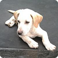 Adopt A Pet :: Griffin - Burlington, VT