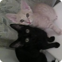 Adopt A Pet :: Brothers Teddy & Olly - Kirkwood, DE