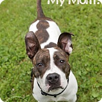 Adopt A Pet :: May - Ashland, WI