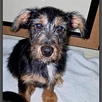 Adopt A Pet :: Myoh - DeForest, WI