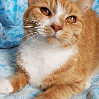 Adopt A Pet :: Khaleigha - Hornell, NY