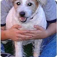 Adopt A Pet :: RUSSELL - Phoenix, AZ
