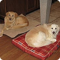 Adopt A Pet :: Sophie and Shiloh - Foster, RI