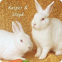 Adopt A Pet :: Kasper & Lloyd - Santa Barbara, CA
