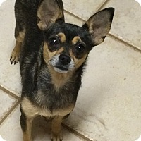 Adopt A Pet :: Hope - Edmond, OK
