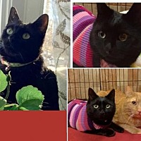 Adopt A Pet :: Pepper - Flushing, NY