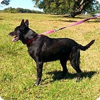 Adopt A Pet :: Ann - Sandy Hook, CT