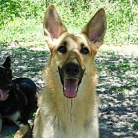 Adopt A Pet :: NALA (DG) - Tampa, FL