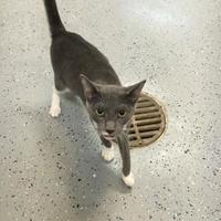 Adopt A Pet :: Layla - Brooksville, FL