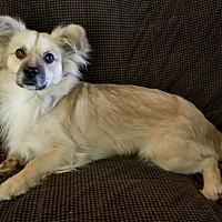 Adopt A Pet :: Kota (CNC) - Allentown, PA