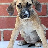Adopt A Pet :: Ruthie - Waldorf, MD
