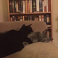 Adopt A Pet :: Jack and Jill - Fairfax, VA