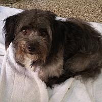 Adopt A Pet :: Grover - Thousand Oaks, CA