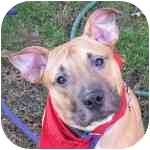 Terrier (Unknown Type, Medium) Mix Dog for adoption in Eatontown, New Jersey - Brad