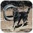 Photo 2 - German Shepherd Dog Dog for adoption in Santa Barbara, California - Maxamillian
