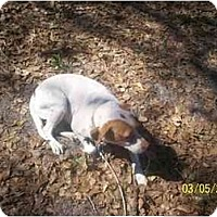 Adopt A Pet :: Kelly - HOBOKEN, GA