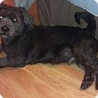 Adopt A Pet :: Diggory - Mt Gretna, PA