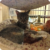 Adopt A Pet :: Tulip - Monroe, GA