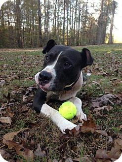 Pit Bull Terrier Mix Dog for adoption in Helena, Alabama - Aspen