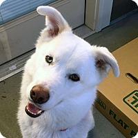 Adopt A Pet :: SHADOW-Adoption Pending - Boise, ID
