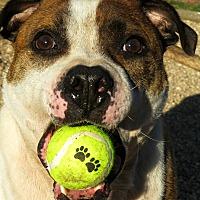 Adopt A Pet :: Tigger - West Babylon, NY
