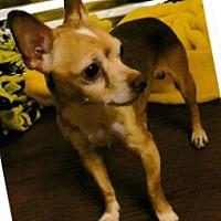 Adopt A Pet :: Race - North Myrtle Beach, SC