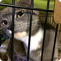 Adopt A Pet :: Rihanna - Byron Center, MI