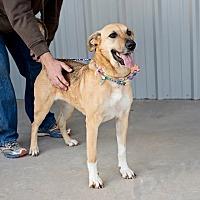 Adopt A Pet :: Samantha - Hereford, TX