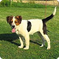 Adopt A Pet :: SHIVON - Hartford, CT