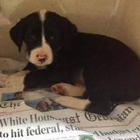 Adopt A Pet :: Guardian - Clarkesville, GA