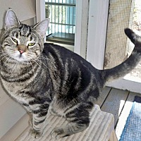 Adopt A Pet :: Valiant17 - Youngsville, NC