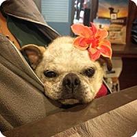 Adopt A Pet :: Randa - Austin, TX