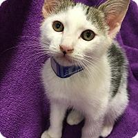 Adopt A Pet :: Sparticus - Tracy, CA