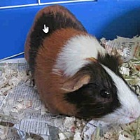 Adopt A Pet :: *Urgent* Morty - Fullerton, CA