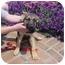 Photo 2 - German Shepherd Dog Mix Puppy for adoption in Grove City, Ohio - Keno