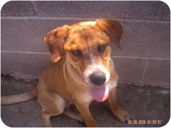 Labrador Retriever Mix Dog for adoption in KELLYVILLE, Oklahoma - LUCY