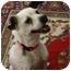 Photo 3 - Jack Russell Terrier/Rat Terrier Mix Dog for adoption in Huntsville, Alabama - Misty