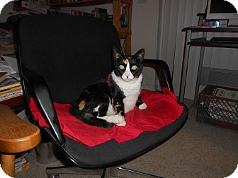 Calico Cat for adoption in Fernley, Nevada - Party Girl