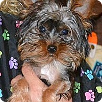 Adopt A Pet :: Hershey - Greensboro, NC
