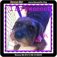 Adopt A Pet :: Bugzee - Scottsdale, AZ