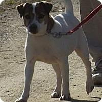 Adopt A Pet :: JImmy - Clinton, ME