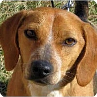 Adopt A Pet :: Gwenie-ADOPTED - Indianapolis, IN