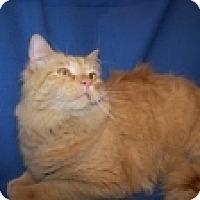 Adopt A Pet :: Little One - Colorado Springs, CO