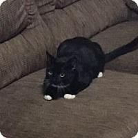 Adopt A Pet :: Shadow - Sacramento, CA