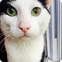 Adopt A Pet :: Cisco - Chicago, IL