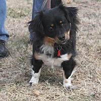 Adopt A Pet :: Princess - Wichita, KS